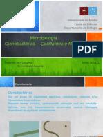 Microbiologia Cianobacterias