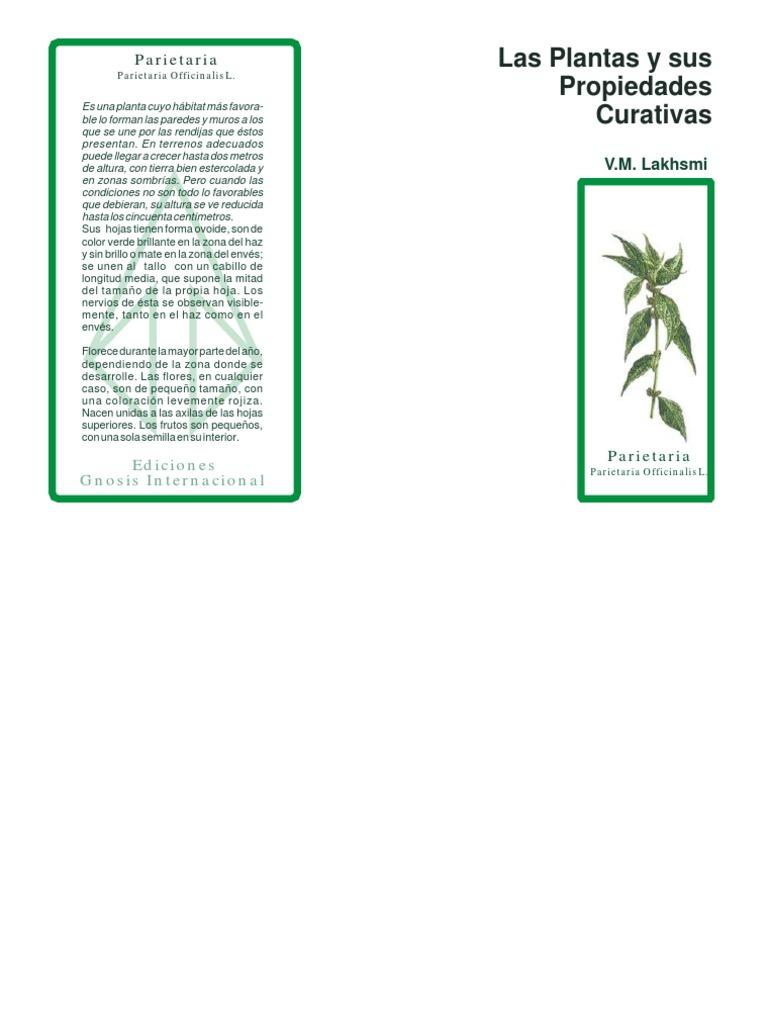 Lakhsmi Las Plantas Y Sus Poderes Curativos