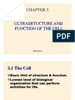 Chapter 3- Cells