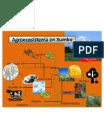Agroecosistema en Yumbo