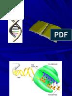 2 CLASE cidos Nucleicos