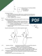 10i10 Endokrina Organ