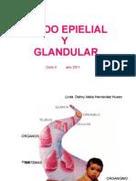 Tej. Epitelial y Glandular 2011