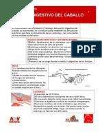 901 Aparato Digestivo Del Caballo[1]