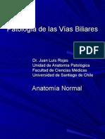 Patología de Las Vías Biliares