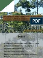 Secuestro de carbono a través la reforestación en
