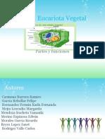 ExposicionCelula_Eucariota_Vegetal