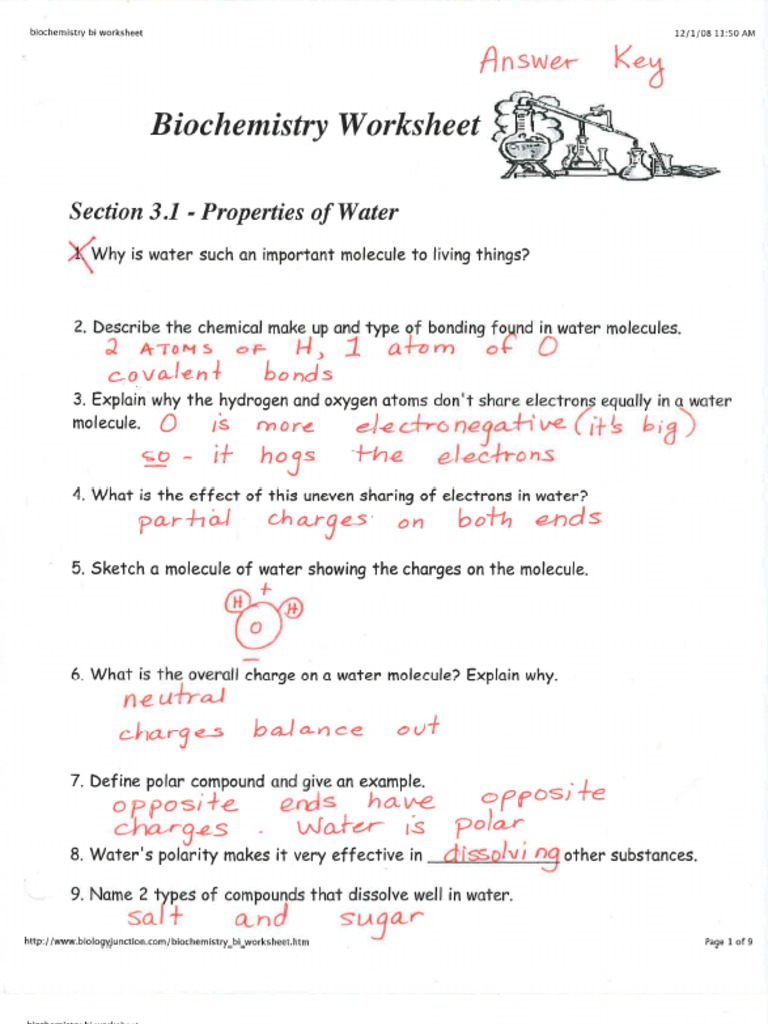 KEY- Biochemistry Worksheet (CP)