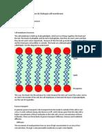 Resumen para examen de biología cell membrane