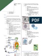 Parasitology-Lec 10 Entamoeba