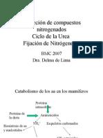 BMC-Ciclo Del Nitrógeno y Ciclo de La Urea
