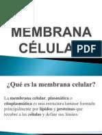 MEMBRANA CÉLULAR funciones