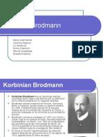 Areas de Brodmann
