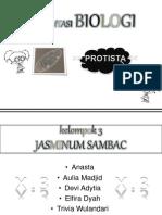 Presentasi tentang Protista (mirip hewan)