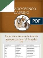 Alimentacion y Nutricion de Ovinos y Caprinos