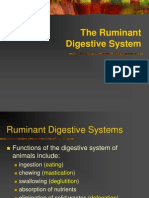 Ruminant Digestive System - Copy