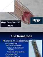 Ancilostomideos