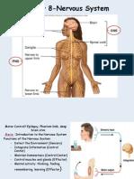 Biology128_NervousSystemI