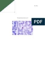 BOHOL Plasmodium malariae