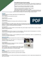 Trucos Caseros Combatir Plagas