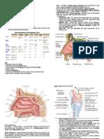 Respiratory System (Histo)