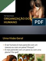 ORGANIZAÇÃO DO CORPO HUMANO
