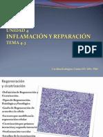 Inflamación y Reparacion