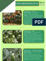 Ficha de Plantas Import Antes de Ica