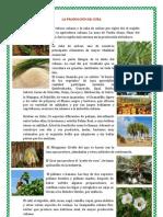 LA PRODUCCIÓN DE CUBA