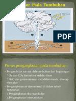 Angkut Air pada tumbuhan (intravaskuler dan extravaskuler)