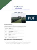 Tree Lucerne