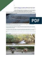 Clasificación de cuerpos de agua miryam