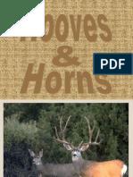 Hooves Horns[1]
