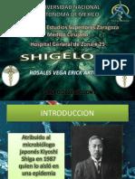 Shigelosis