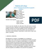 Medicina Del Cobaya