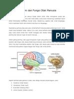 Anatomi Dan Fungsi Otak Manusia