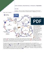 Ciclos 5to Seminario Protozoarios de Sangre y Tejidos II. API Complex A
