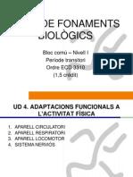 Bloc comú I-Fonaments Biològics-UD4