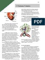 Anatomia - apostila - Sistema Urinário