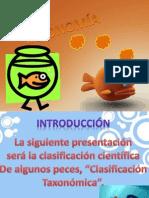 Clasificación Taxonómica II