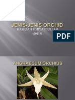Jenis Jenis Orchid