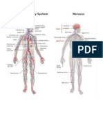Circulatory System Nervous System