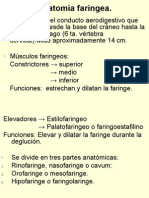 7377695 Anatomia Faringea[1]