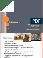 Presentacion Taxonomía, Mamïferos.