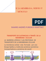FISIOLOGÍA  DE LA MEMBRANA, NERVIO Y MÚSCULO. III CICLO