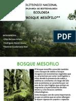 BOSQUE MESOFILO 2