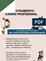 Adiestramiento Canino Profesional