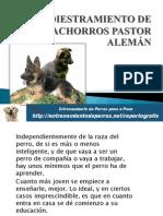 ADIESTRAMIENTO DE CACHORROS PASTOR ALEMÁN