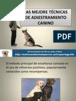 LAS MEJORE TÉCNICAS DE ADIESTRAMIENTO CANINO