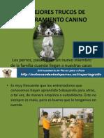 Los Mejores Trucos de Adiestramiento Canino